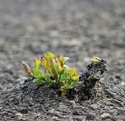 Selbstdisziplin - Schlüssel zu einem erfolgreichen Leben